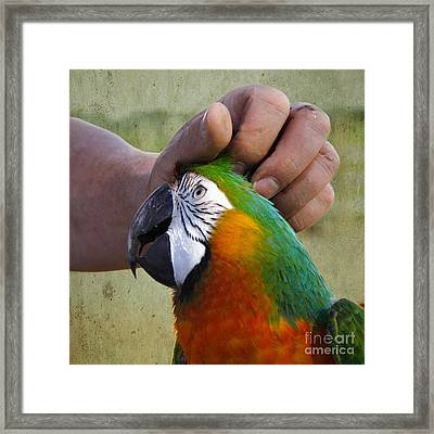 Framed Print featuring the photograph The Human Touch by Jan Piller