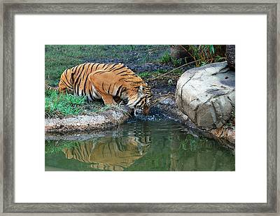 The Humble Framed Print by Teresa Blanton