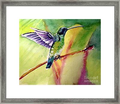 The Hummingbird Framed Print