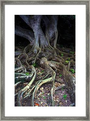 The Hungry Roots Framed Print by Carl Purcell
