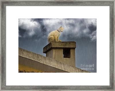 The Hunt Goes On Framed Print by Al Bourassa