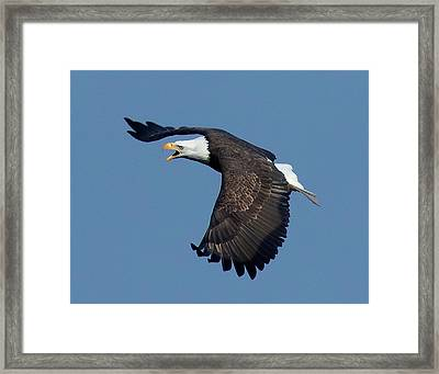 The Hunt Framed Print by Sheldon Bilsker
