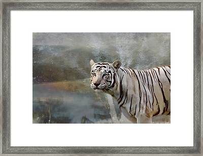 Framed Print featuring the photograph The Hunter by Gary Smith