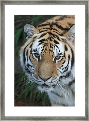 Framed Print featuring the photograph The Hunter by Laddie Halupa