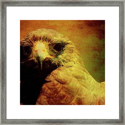 The Hunter . Portrait Of A Hawk . Square . 40d7877 Framed Print by Wingsdomain Art and Photography