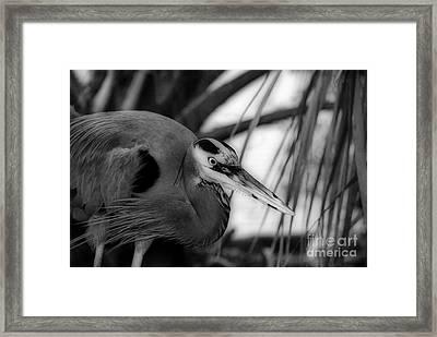 The Hunter Framed Print by Skip Willits