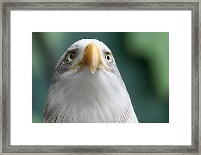 Framed Print featuring the photograph The Hunters Stare by Laddie Halupa