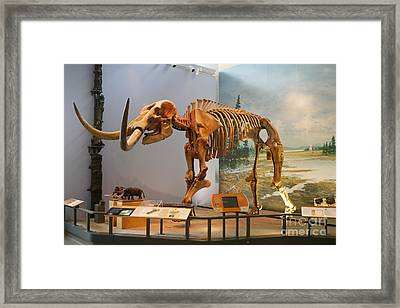The Hyde Park Mastodon Framed Print by John Kaprielian