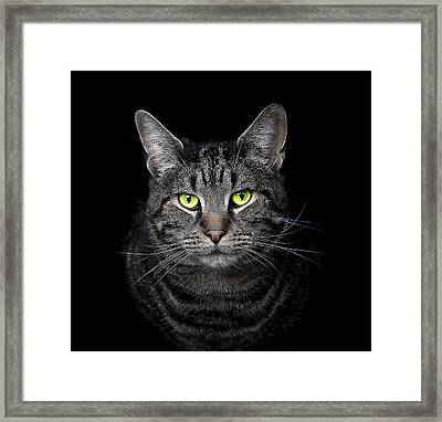 The Hypnotist Framed Print by Paul Neville