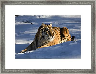 The Ice King Framed Print by Dewain Maney