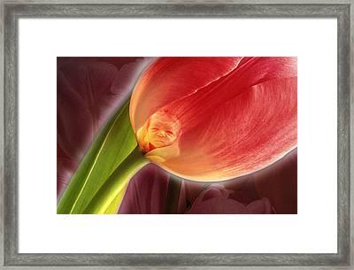 The Imp Framed Print by Tony Ramos