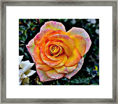 Framed Print featuring the mixed media The Imperfect Rose by Glenn McCarthy
