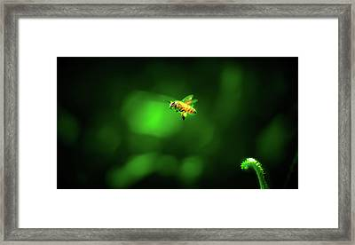 The Incredible Journey Of Mrs. Honeybags Framed Print