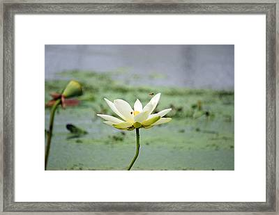 The Inhabitants Framed Print by Teresa Blanton