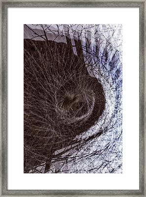 The Inner Ear Of Trees Framed Print by Deborah Hughes