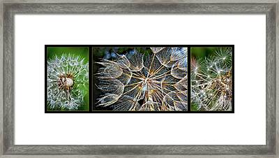The Inner Weed Triptych Framed Print