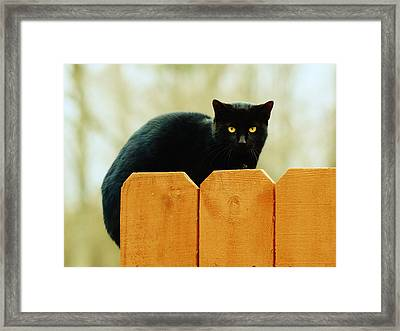 The Instigator Framed Print