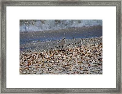 Framed Print featuring the photograph The Intellectual II by Michiale Schneider