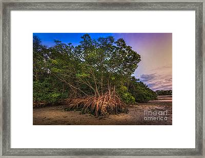 The Interwoven Framed Print by Marvin Spates