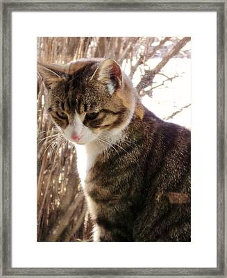 The Intruder Framed Print by Janice Robertson