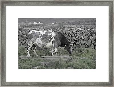 The Ireland Moo Framed Print