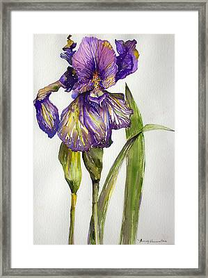 The Iris Framed Print by Mindy Newman