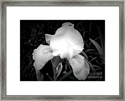 The Iris That Glows Framed Print