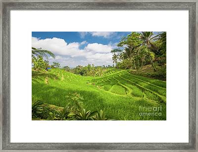 The Island Of God #14 Framed Print