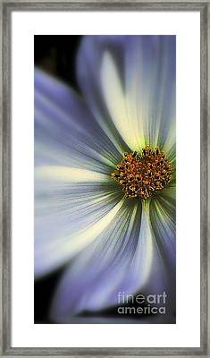Framed Print featuring the photograph The Jewel by Elfriede Fulda