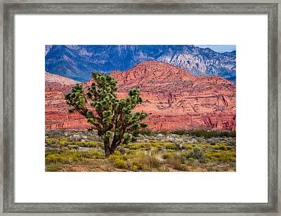 The Joshua Tree Framed Print by TL  Mair