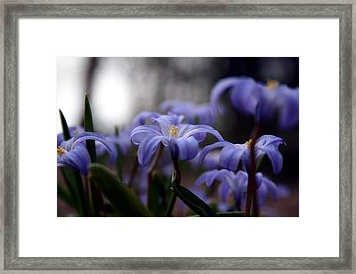 The Joy Of Springtime Framed Print