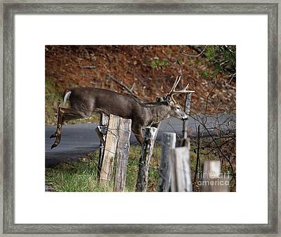 Framed Print featuring the photograph The Jumper 2 by Douglas Stucky