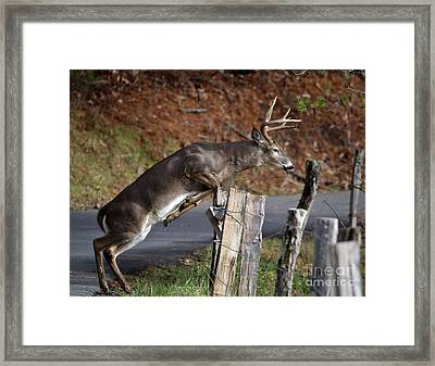 Framed Print featuring the photograph The Jumper by Douglas Stucky
