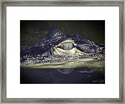 The Juvy Framed Print