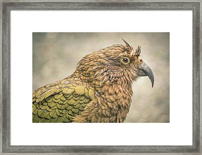 The Kea Framed Print