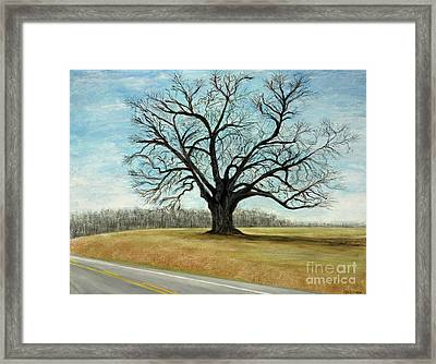 The Keeler Oak Framed Print