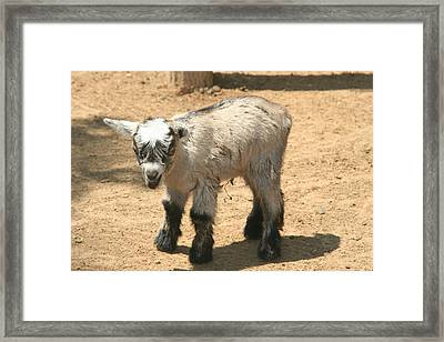 The Kid Framed Print by Amy Holmes