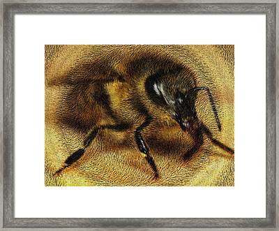 The Killer Bee Framed Print by ISAW Gallery