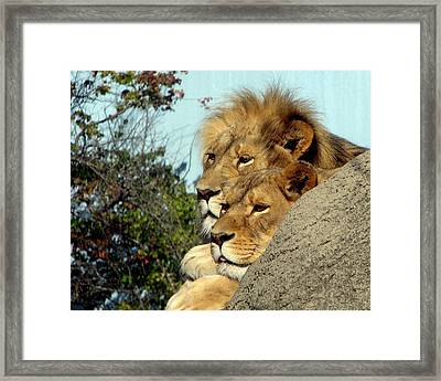 The King And Queen 1 Framed Print