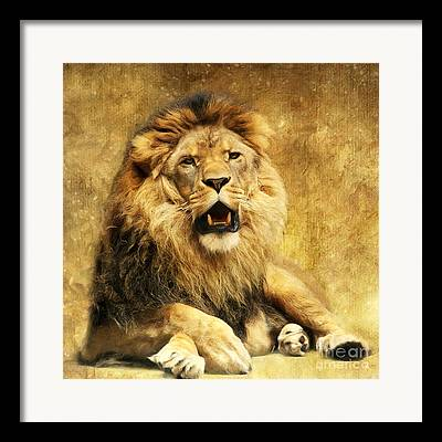 Lions Mixed Media Framed Prints
