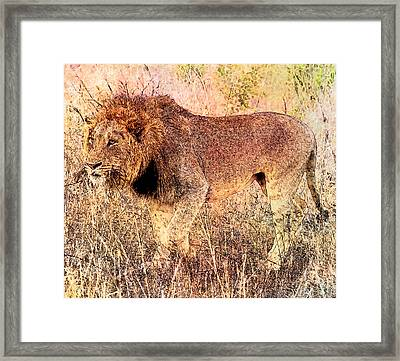 The King Framed Print by Ericamaxine Price