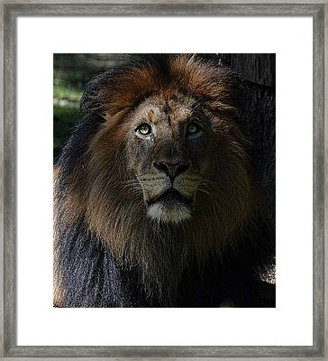 The King In Awe Framed Print by Ronda Ryan