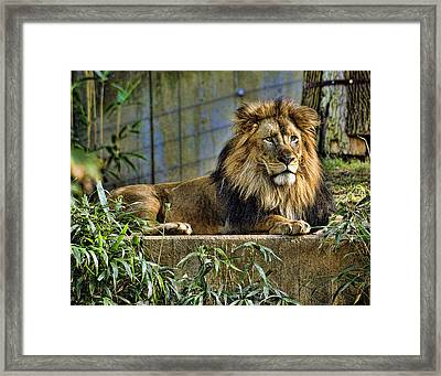 The King Framed Print by Keith Lovejoy