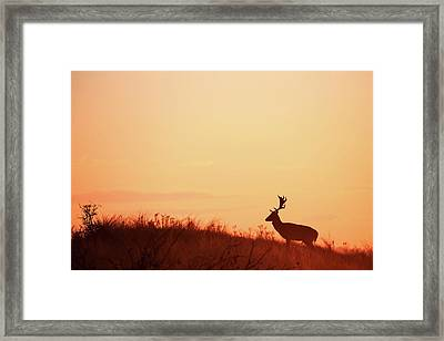 The King Of The Hill Framed Print
