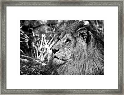 The King Of The Jungle Framed Print