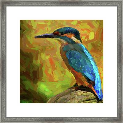 The Kingfisher Framed Print by Tilly Williams