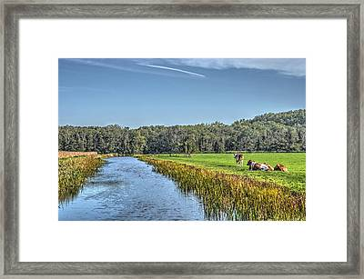 The King's Cows Framed Print