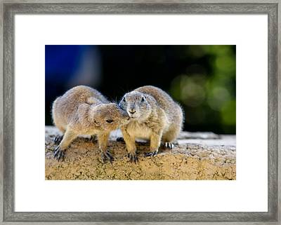 The Kiss Framed Print by Edward Myers