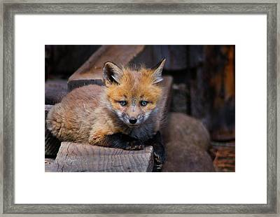 The Kit Framed Print by John De Bord