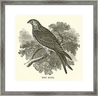 The Kite Framed Print